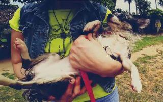 В отпуск с домашними животными