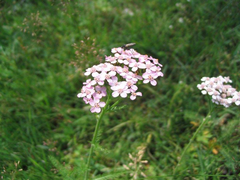 Флора Алтайского заповедника