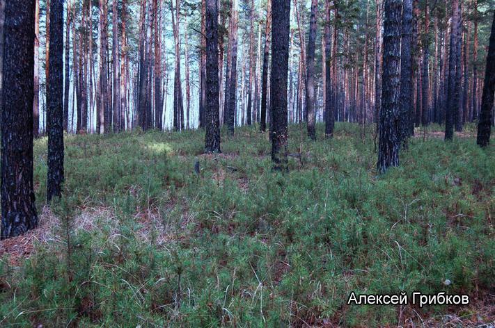 Фото: Алексей Грибков / tigirek.ru