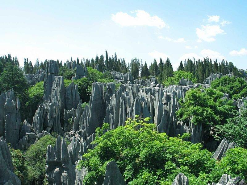 Панорама каменного леса