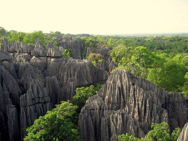 Вид с верху на каменный лес на Мадагаскаре - фото 13