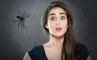 5 самых опасных насекомых и животных Турции, которых лучше избегать