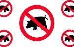 Вот почему мусульманам нельзя есть свинину
