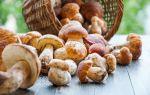 Можно ли по исламу есть грибы