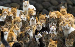 Деревня, где живут одни кошки