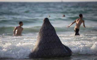 Как мусульманки купаются в море (фото)