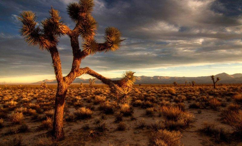 Мохаве пустыня на карте
