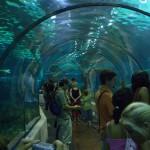 Подводный стеклянный туннель