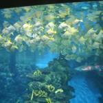Рыбки в аквариуме Барселоны