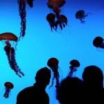 На фоне медуз