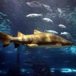 Акула в аквариуме Барселоны