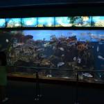 Один из аквариум в Барселонском океанариуме