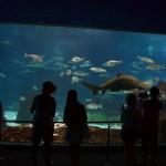 Посетители любуются подводными обитателями
