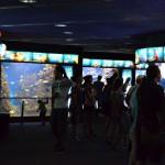Ряд аквариумов