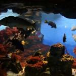 Питомцы океанариума