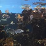 Питомцы барселонского океанариума