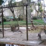Место, где проживают мадагаскарские лемуры