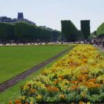 Цветы Люксембургского сада - 3