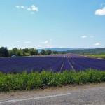 Красивый вид на Лавандовое поле, Прованс