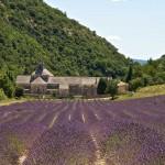 Лавандовые поля аббатства Abbaye de Sénanque