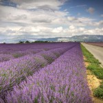 Лавандовое поле рядом с трассой, Прованс, Париж