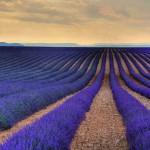 Вид на Лавандовое поле в Провансе