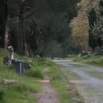 Скамейки на Аппиевой дороге