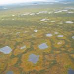 Васюганские болота вид с вертолета 5