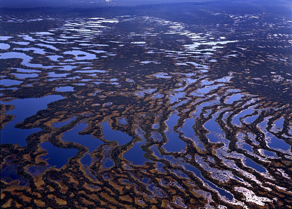 занимаемая площадь болот
