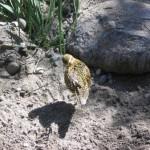 Животный мир Васюганских болот