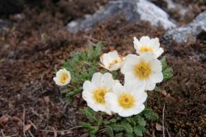 Растительность Большого Арктического заповедника