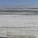 Арктический заповедник арктических пустынь