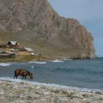 Лошадь у Байкала, остров Ольхон