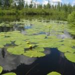Озеро Чеко