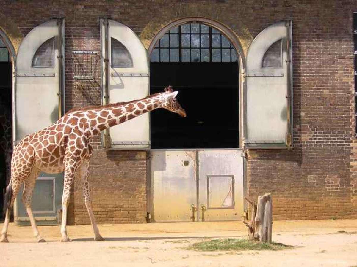 Дом жирафа в зоопарке, Лондон