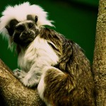 Обезьянка в зоопарке, Лондон