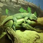 Дом рептилии