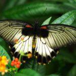 Бабочки в ботаническом саду