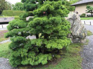 Природа Монреальского ботанического сада