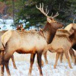 Животный мир национального парка
